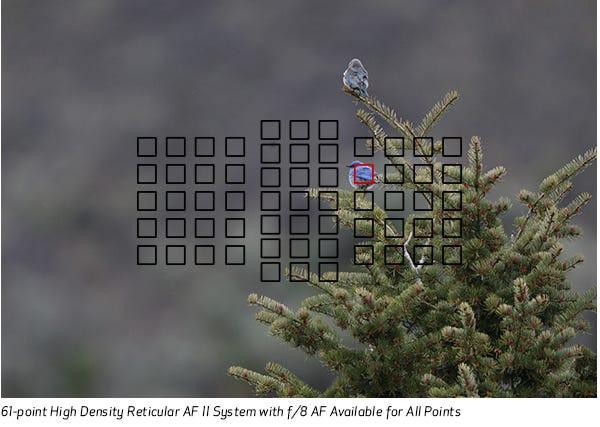 61-point High Density Reticular AF II system